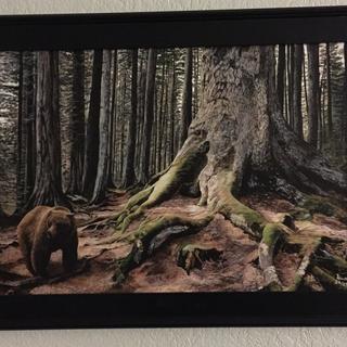 """""""Bear Root"""""""
