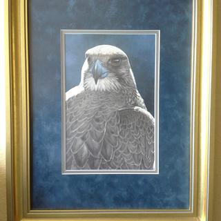 Gyrfalcon print in Gold Wood Frame