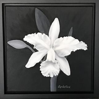 """12 """" x 12"""" black and white oil painting on gallery wrap canvas entitled Toy Orchid"""