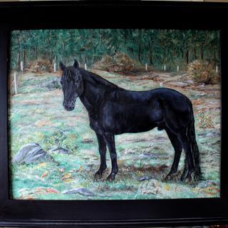 My Stallion Same-O