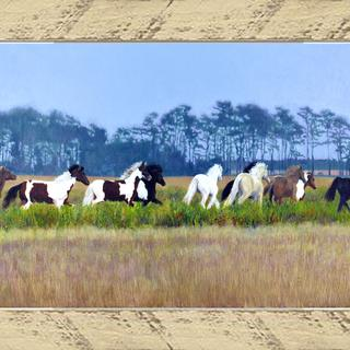 Chincoteague Ponies, Buttermilk Frame