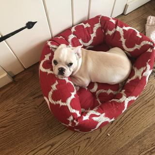 Louie LOVES his bed!! He's a 13 week old French Bulldog and he took to this bed right away.