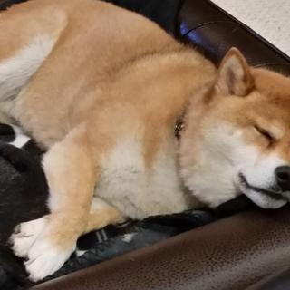 Resting easy