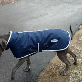 Actually fits my Great Dane.