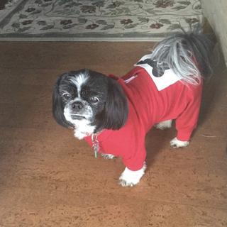 Bobo ready for Christmas!