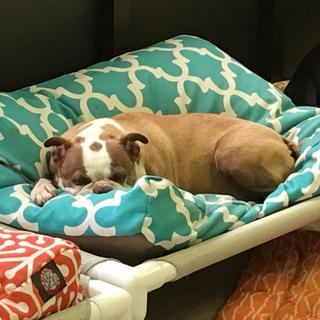 Maverick likes his bed!