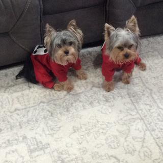We like our pjs. Elliot and Oliver