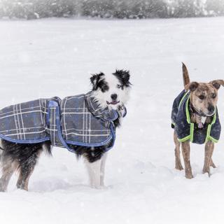 Warm happy dogs!