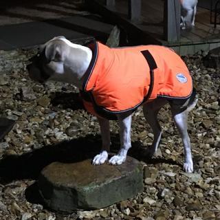 Sevin LOVES her winter coat!!! Leg straps are short so we dont use them,