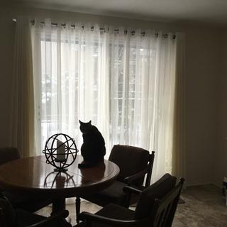Même mon chat Milou aime mes nouveaux rideaux !