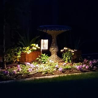 Great lighting around our backyard