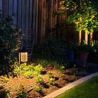 Another flower bed with the Maple lit further down.