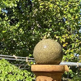 Lots of wee birdie visitors