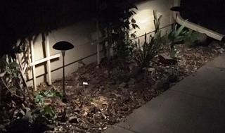 Two mushroom lights