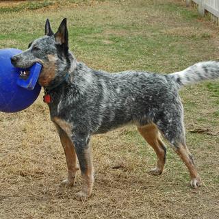 Love that Jolly Ball!