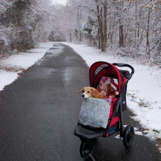 HOneybone loves her stroller!  We can go to all the parks and woods we used to!