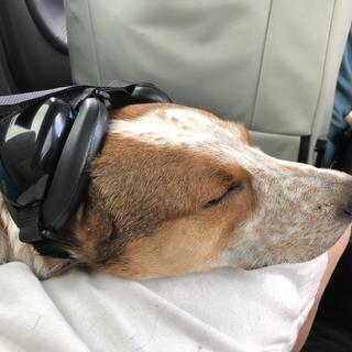 "Heidi is sleeping like a baby calmed by a car ride.  ""What ear muffs?"""