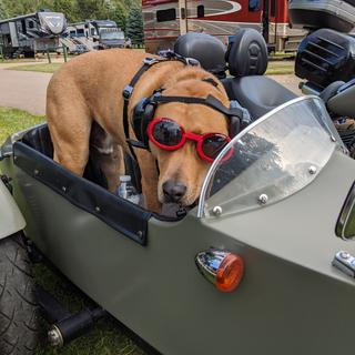 JayeP Loves Riding in the Sidecar!
