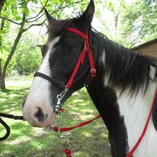 Triple E Nylon Trail Headstall and Reins