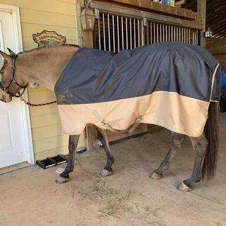 Very impressed with the fit of the mio lightweight turnout blanket on my stocky quarter horse!