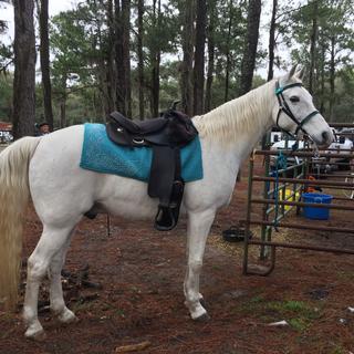 Teal saddle pad