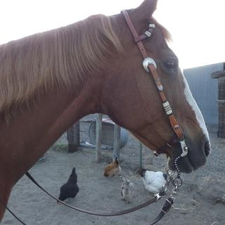 Nice bit and happy mare.