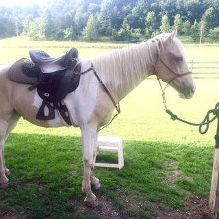 TWH with size 17.5 saddle.  Everywhere we go, people ask us where we got our Tucker?