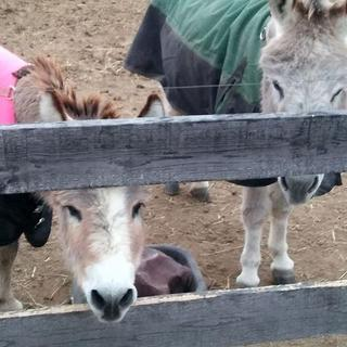 Fred and Ted - Donkeys Extraordinaire.