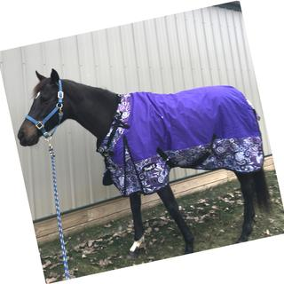 Beginning year two - this blanket looks great.  It's been washed twice.  Fanciest mare on the farm.