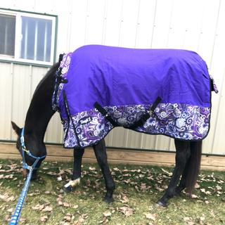Beginning year two -this blanket looks great.  It's been washed twice.  Fanciest mare on the farm!
