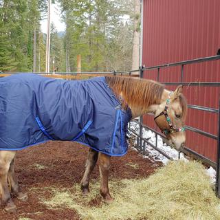 My new horse came from sunny Arizona, now at home in the cold Oregon mountains. Neck cover at night.