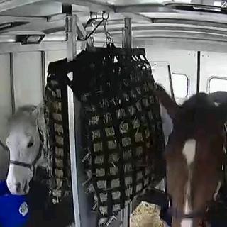 Rear horses