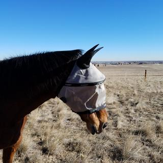 perfect for my horse!