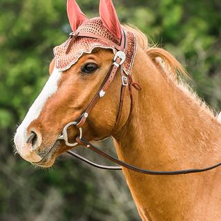 Joey with his new bridle and custom made fly bonnet