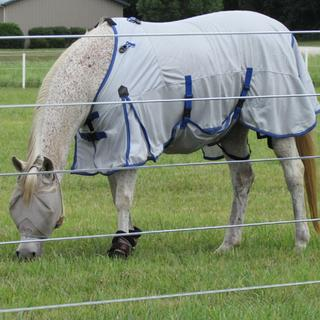 Size 69 fits my small Arab mare.