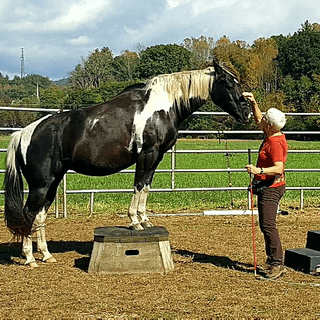 Breeze likes to play on her pedestal
