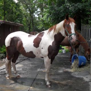 I have been using Probios for a few years,my horse is 24 years old,very happy with product.