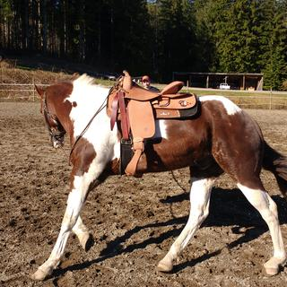 I'm really happy with this work saddle!