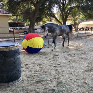 Harik and his ball