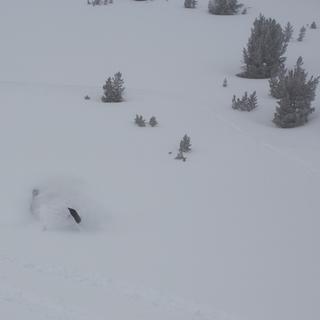 Downhill carve in the deep Sierra Powder at 10,000 feet