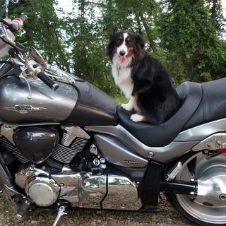 My road dawg