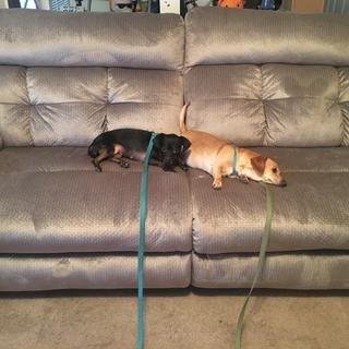 The Price Is Right Pups are resting comfortably thanks to Ashley Furniture!