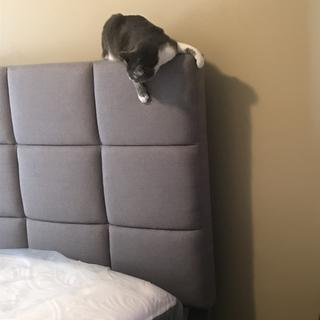 The cat loves the massive headboard