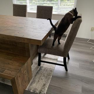 My kitty Bella checking out our new furniture!
