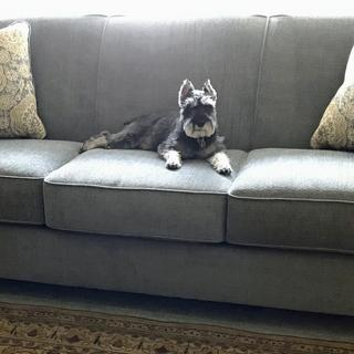 I and Radar are extremely happy with our new sofa from Ashley HomeStore!