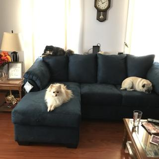 you can see I have pets, these couches are pet friendly. They're easy to keep clean and look great