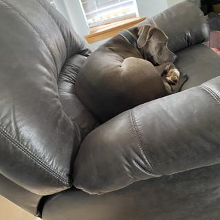 The husband isn't the only who likes the new recliner.