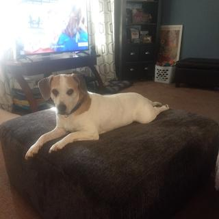 Non-Professional quick doggy on ottoman