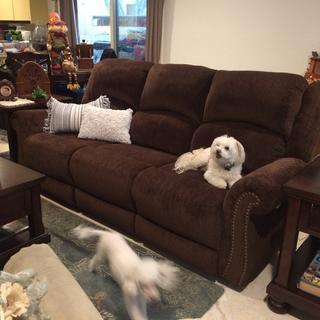 Home sweet home. My dogs love my sofa too.