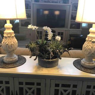 Home Accents Orchid and Succulent Garden with Driftwood and Decorative Vase